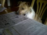 Captain reading the paper