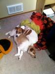 Jack and Bella